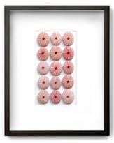 Urchins (Shadow Box Frame)