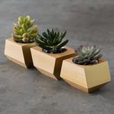 Boxcar Planter Set