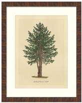 Norweigan Spruce Tree Framed Canvas