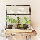Graham and Green Wooden Based Terrarium