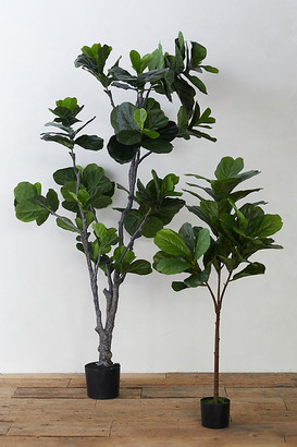 Anthropologie Faux Fiddle Leaf Fig Tree By in Assorted Size S