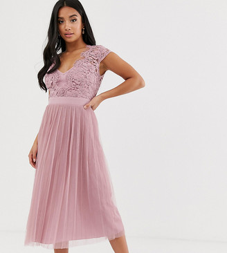 Little Mistress Petite capped sleeve lace midi dress with tulle skirt
