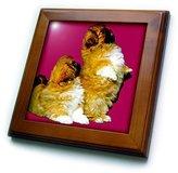 3dRose LLC ft_778_1 Dogs Pekingese - Pekingese - Framed Tiles