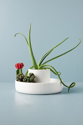 Umbra Fountain Planter By in White