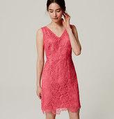 LOFT Petite Plume Lace Dress