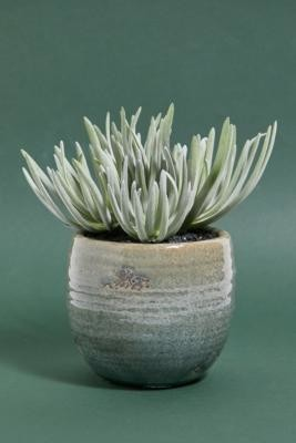 Urban Outfitters Faux Crassula Plant - Assorted ALL at