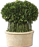 Uttermost Preserved Boxwood Willow Topiary Botanicals
