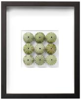 Seafoam Urchins by Christopher Marley (Shadow Box Frame)