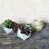 Graham and Green Set Of Six Faux Potted Succulents