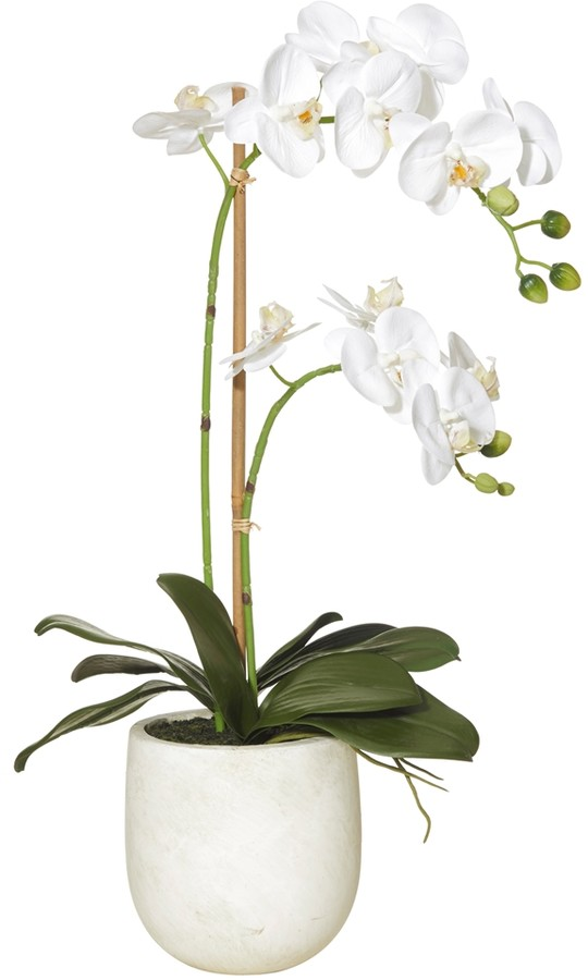 Butterfly Orchid Stone Pot 60cm