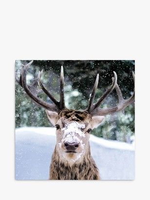 Woodmansterne Stag with Snow Christmas Card