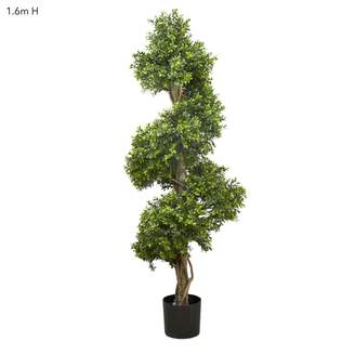 Emac & Lawton Boxwood Spiral Tree 1.5m