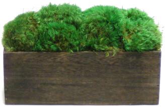 Bougainvillea Moss Short Wooden Rectangular Container