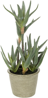 Parlane - Potted Aloe Plant - Small
