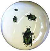 Natural History - The Origin of Style Creeping Beetle Paperweight