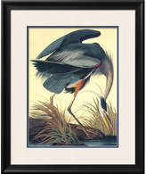 Art.com 'Great Blue Heron' by John James Audubon Framed Graphic Art
