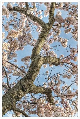 Jonathan Bass Studio Cherry Blossoms 2, Decorative Framed Hand Embellis