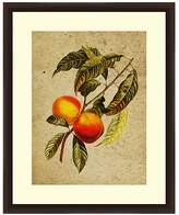 PTM Images Vintage Peach Wall Art