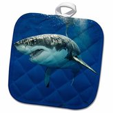 """3D Rose Great White Shark-Carcharodon Carcharias-Guadalupe Island-Mexico-Eastern Pacific Ocean Pot Holder, 8"""" x 8"""""""