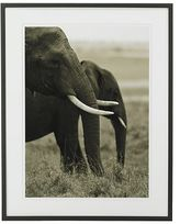 Gero Heine Elephant Photography, Two Grazing