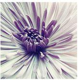 Pottery Barn Purple Star Framed Print by Lupen Grainne