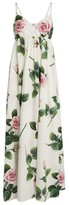 Dolce & Gabbana Cotton Tropical Rose Maxi Dress