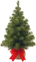 National Tree 2' Noble Spruce Tree with Burlap Bag - 24 in. - 36 in.