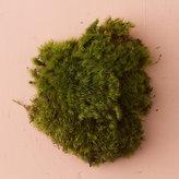 Fresh Clump Moss ,