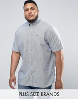 Tommy Hilfiger PLUS Short Sleeve Shirt Stripe Buttondown in White/Navy