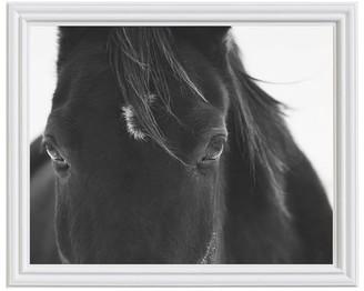 Pottery Barn Black Horse Portrait Framed Paper Print by Jennifer Meyers