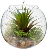Linea Spikey succulent in bowl