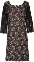 Diane von Furstenberg Zarita lace and jersey mini dress