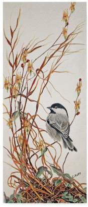 CAROL J. Trademark Fine Art Rupp 'Chickadee In Summer Grass' Canvas Art