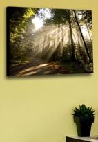 Graham & Brown Art Forest Sunburst