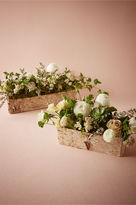 BHLDN Birch Dreams Planters