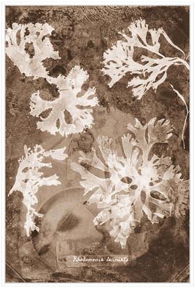 Jonathan Bass Studio Natural Forms Sepia 1, Decorative Framed Hand Embe