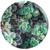 Oliver Gal Succulents Circle (Acrylic)
