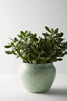 Anthropologie Sage Garden Pot