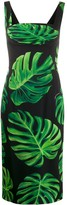 Dolce & Gabbana leaf print fitted dress