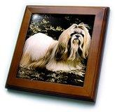 Shih 3dRose LLC ft_507_1 Dogs ShihTzu Tzu - Framed Tiles