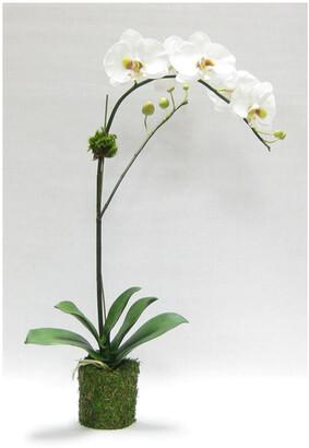 Bougainvillea Drop In White & Green Artificial Orchid In Moss Pot
