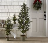 Pottery Barn Faux Lit Cypress Trees