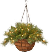 NATIONAL TREE CO National Tree Company 20 Tiffany Fir Battery-Operated LED Hanging Basket with Timer