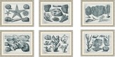 The Well Appointed House Set of Six Aquatic Specimens Framed Wall Art