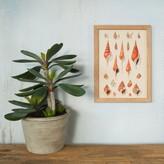 Graham and Green Framed Rectangular Spiral Seashells Print