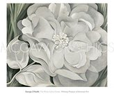 "McGaw Graphics The White Calico Flower, 1931 by Georgia O'Keeffe 25""x30"" Art Print Poster"