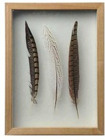 Crystal Art Gallery Feather Wall Art