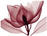 Art.com Red Magnolia I Wall Art Print