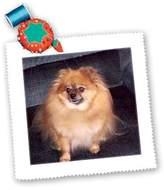 3dRose LLC qs_853_1 Dogs Pomeranian - Pomeranian Dog - Quilt Squares