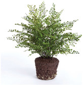 Napa Home And Garden Artificial Maiden Hair Fern Drop-In Plant